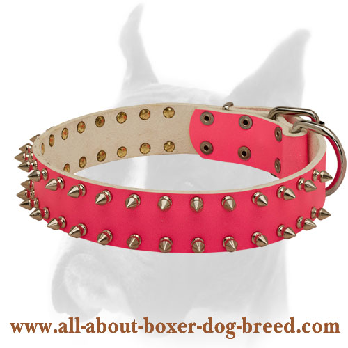 Incredible leather Boxer collar with old nickel  spikes