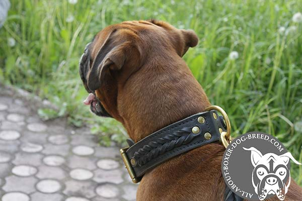 Leather Collar woth Brass D-Ring for Boxer