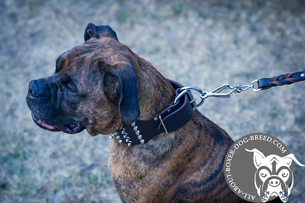 Leather Boxer Collar with Nickel Plated Hardware