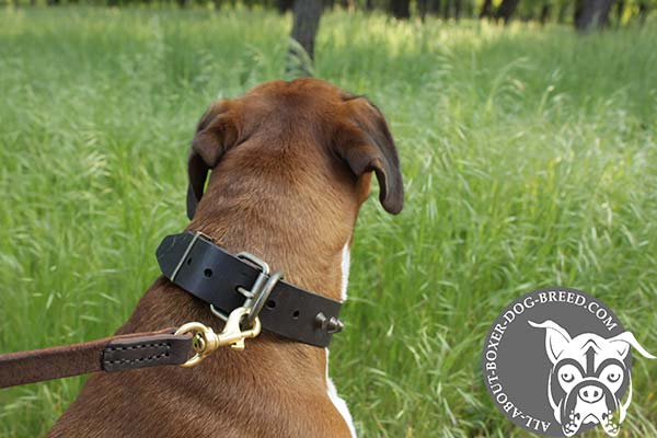 Reliable Leather Boxer Collar with Comfortable Buckle