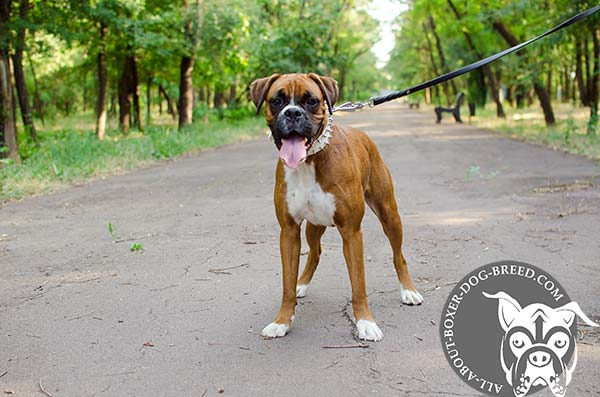Durable Leather Collar for Boxer