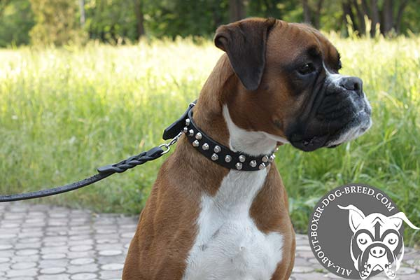 Leather Dog Collar Decorated with Studs for Boxer