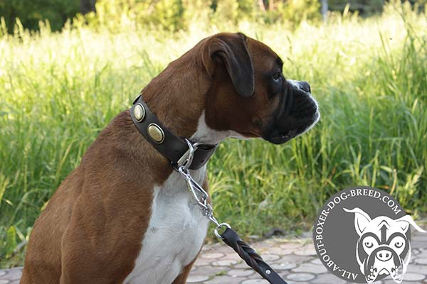 Decorated Leather Boxer Collar for Walking and Training