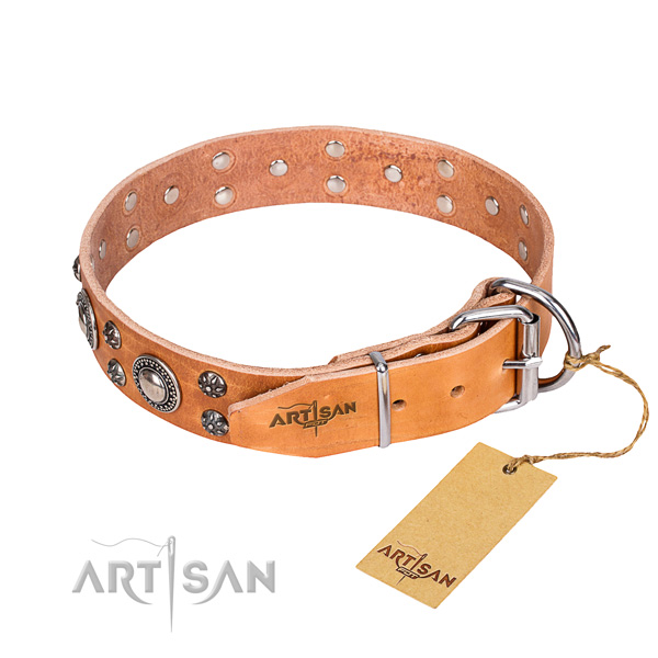 Walking full grain leather collar with studs for your dog