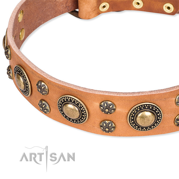 Leather dog collar with remarkable adornments