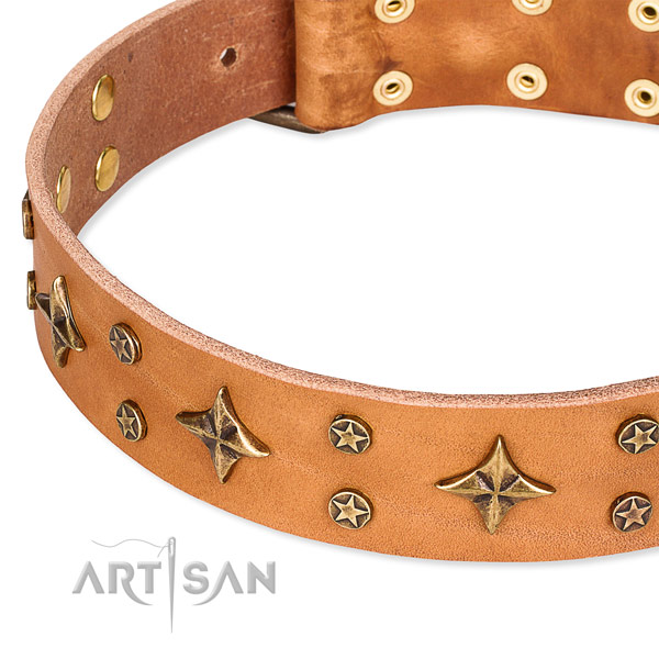 Full grain genuine leather dog collar with exceptional studs