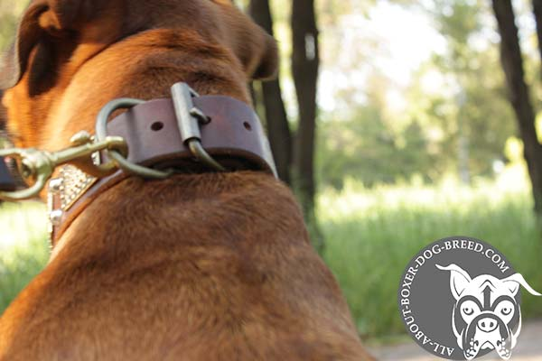 Wide Leather Boxer Collar with Brass Buckle
