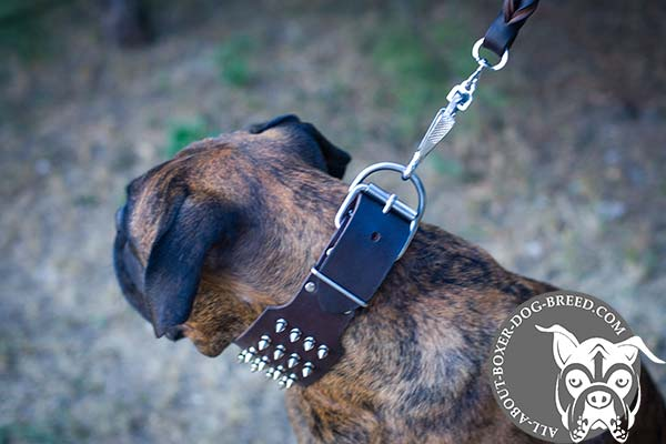 Wide Boxer Collar with Reliable Buckle