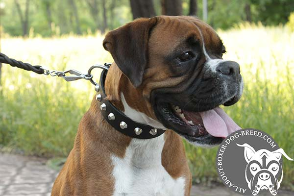 Fashion Leather Collar for Boxer