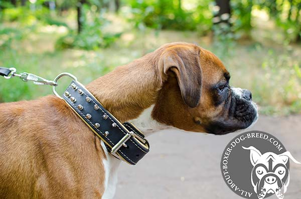 Extra Strong Leather Collar with Studs for Boxer