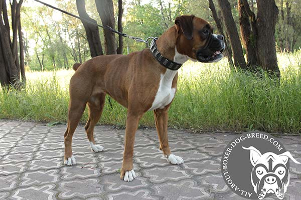 Best Quality Leather Dog Collar for Boxer