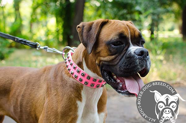 Pink Leather Dog Collar for Boxer