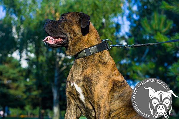 Wide Leather Dog Collar for Boxer