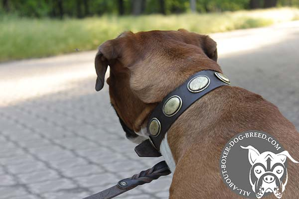 Leather Dog Collar with Vintage Oval Plates for Boxer