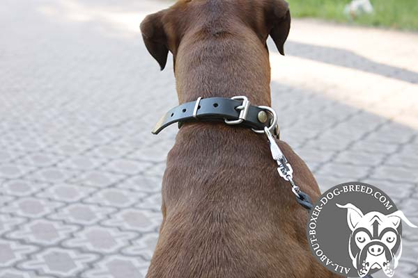 Leather Boxer Collar with Strong Brass Buckle and D-Ring