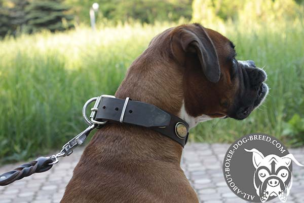Leather Boxer Collar with Strong Buckle and D-Ring