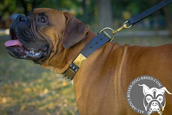 Wide Leather Boxer Collar with D-Ring for Leash Attachment