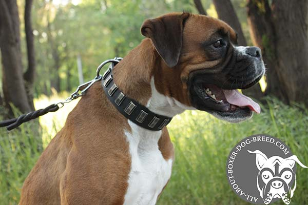 Leather Boxer Collar Decorated with Plates