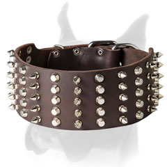 Shiny spikes and studs for leather Boxer collar