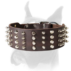 Spiked and studded Boxer collar