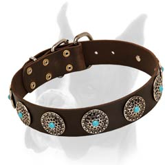 Wide Leather Buckle Collar for Boxer with Plates Ornamented with Blue Stones