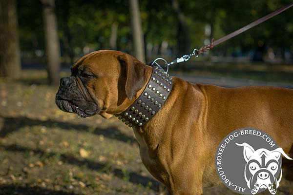 Adjustable Leather Dog Collar for Boxer