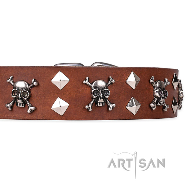 Casual style leather dog collar with incredible studs