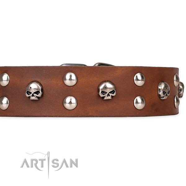 Full grain leather dog collar with polished surface