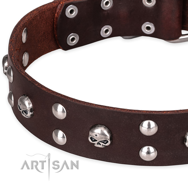 Everyday leather dog collar with fashionable studs
