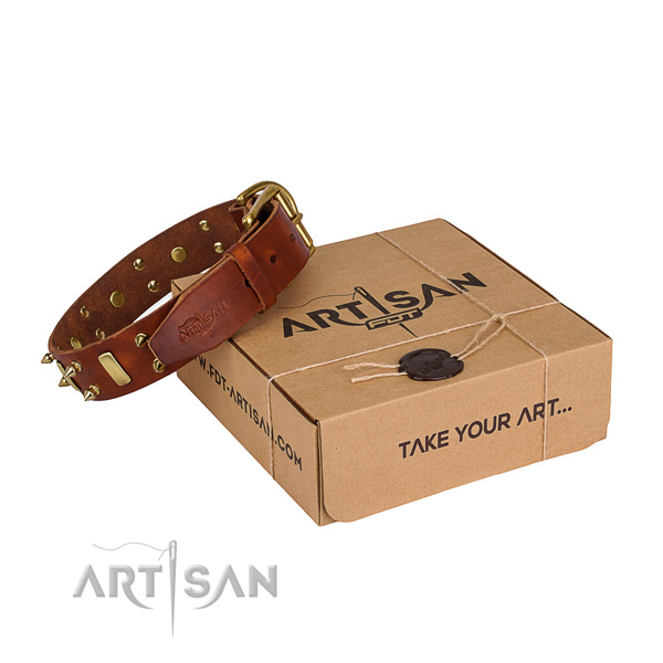 Day-to-day leather dog collar with incredible adornments