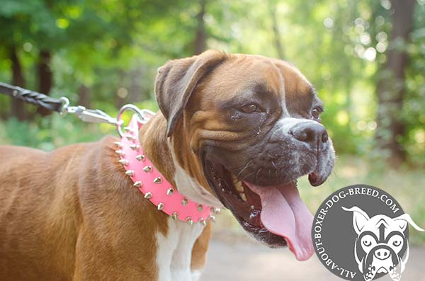 Pink Leather Dog Collar for Female Boxer