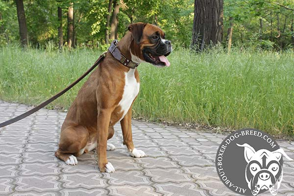 Functional Leather Collar for Boxer Walking and Training