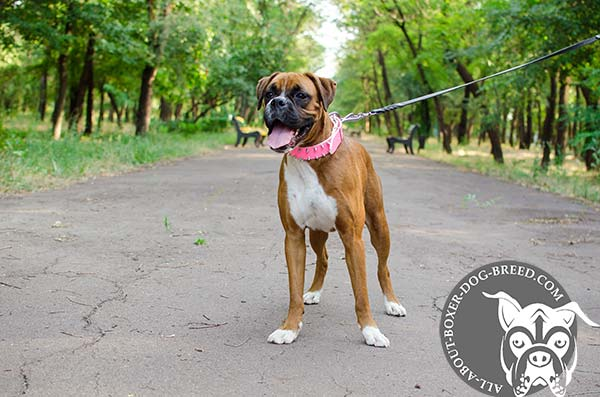Top Quality Leather Dog Collar for Boxer