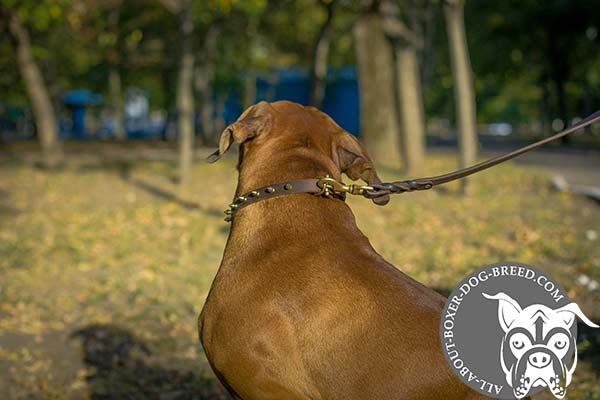 Spiked Leather Dog Collar with Brass Buckle and D-Ring for Boxer