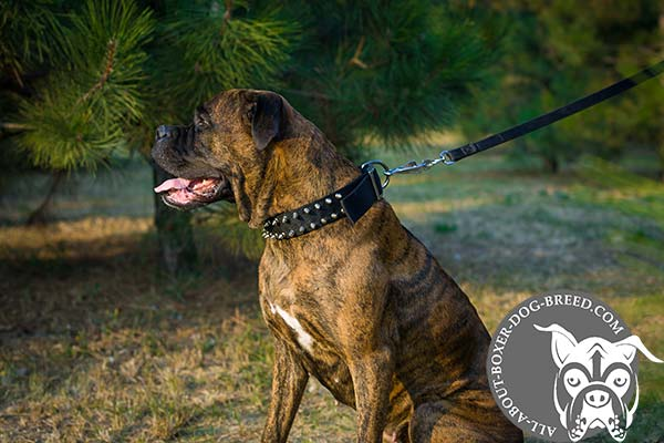 Strong Decorated Nylon Boxer Collar