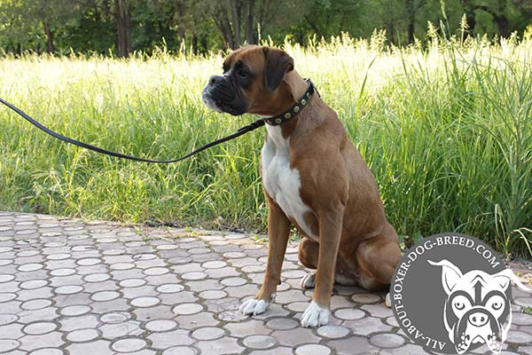 Boxer Collar Made of Full Grain Leather