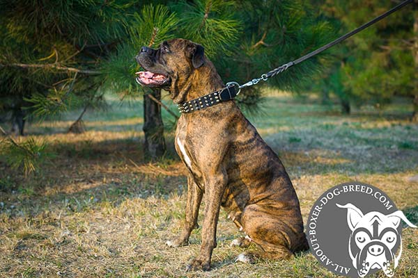 Safe Leather Dog Collar for Boxer