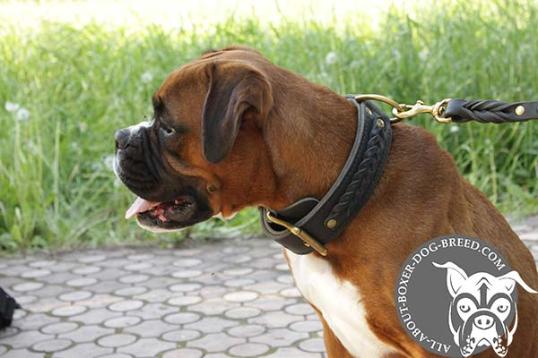 Wide Leather Stitched Boxer Collar
