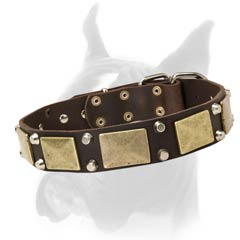 1 1/2 Inches Wide Leather Collar for Boxer with Massive Brass Plates