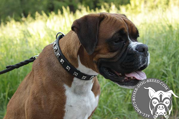 Leather Collar with Nickel Studs for Boxer