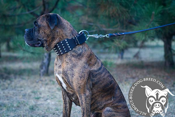 Reliable Leather Dog Collar for Boxer