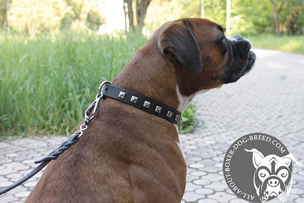 Leather Boxer Collar with Nickel Studs