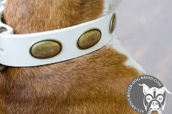 Awesome White Leather Boxer Collar
