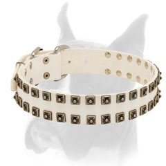 White leather Boxer collar with nickel hardware