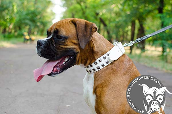 White Leather Boxer Collar for Walking and Training