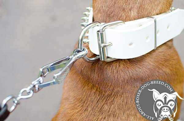 White Leather Buckled Collar for Boxer