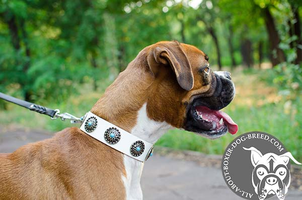 Stylish White Leather Boxer Collar with D-Ring