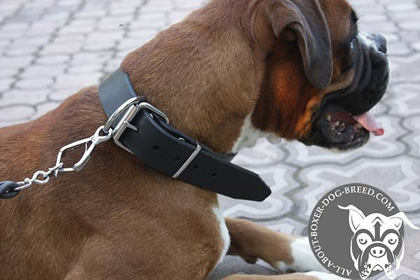 Adjustable Leather Boxer Collar with Nickel Plated Hardware