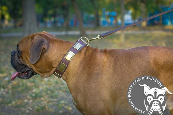 Leather Boxer Collar with Brass Hardware and Plates