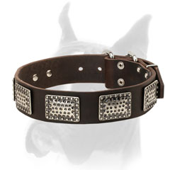 Extra wide leather collar with rust proof hardware for Boxer